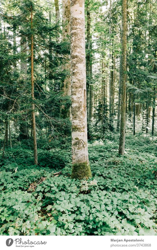 View of the deep forest in the mountains adventure background beautiful day ecology ecosystem environment explore foliage green hiking jungle land landscape