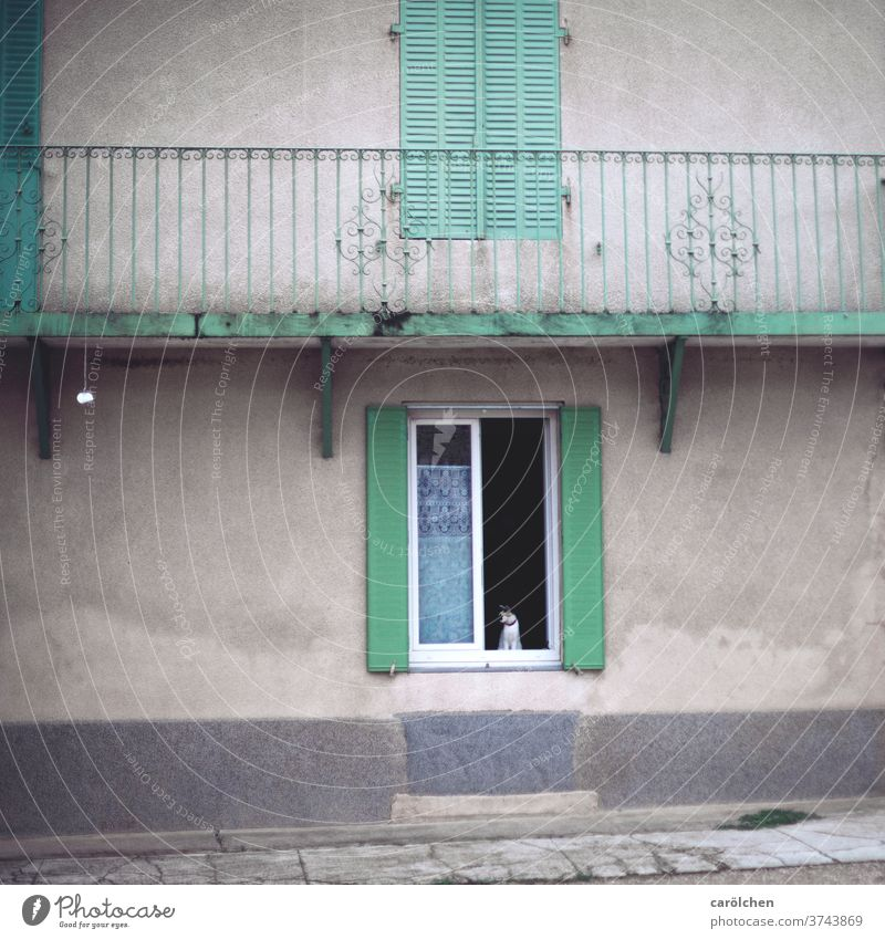 Cat at the window façade Window Shutters photos Old Gray green Mint green Village Village idyll vintage Handrail Old building Reduced shabby Open