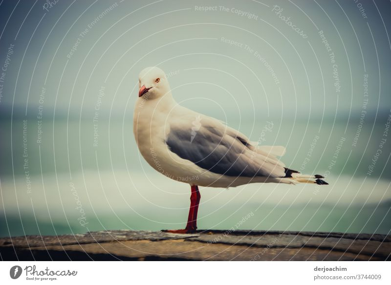 A seagull comes flying, sits down...seagull sits on a wall and looks into the camera. In the background the sea is blurred. Bird Sky Ocean Seagull Grand piano