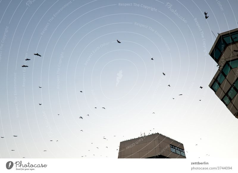Crows over Tegel Berlin birds Flying Far-off places Trajectory Airport Airfield Freedom Sky Deserted Otto Lilienthal Skyline Summer Copy Space tower TXL wide