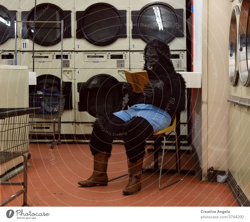 Funny Gorilla Person Reading Book at Laundromat bizarre costume gorilla funny humor indoors launderette laundromat laundry life lifestyle looking machine mask