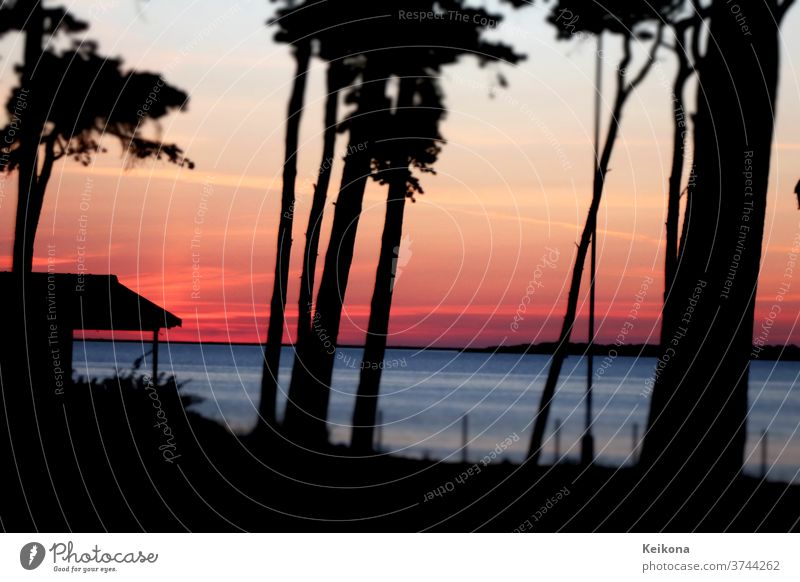 Sunset at the Baltic Sea. Twilight. Pine forest with tree silhouettes. Summer holiday. Jawbone Silhouette vacation pink Blue Water Ocean hut Germany