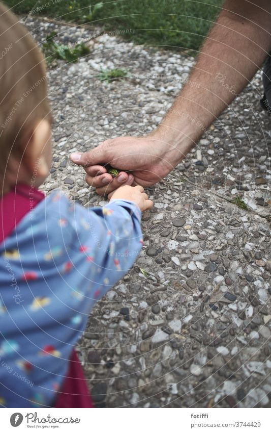 Little child discovers frog in daddy's hand Frog Child Infancy Discover see Curiosity by hand Protect covert To hold on Exterior shot Playing Human being Animal