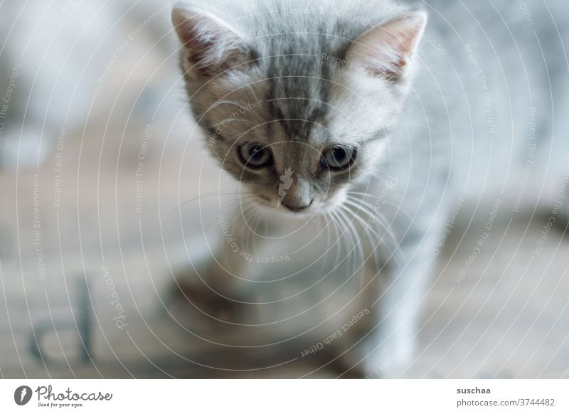 cute little pussy cat Cat Baby Kitten tom Small youthful Sweet Cute Animal Pet Ears peer Whiskers roomier Love of animals inquisitorial explore cautious Looking