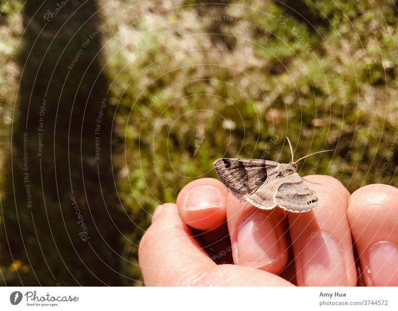 Moth friend Butterfly Insect Animal Close-up Hand Nature Summer Grass Colour photo