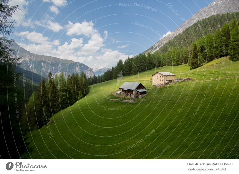 dream alp Environment Nature Landscape Blue Brown Multicoloured Gray Green White Engadine House (Residential Structure) Alpine pasture Pasture Gastronomy Forest