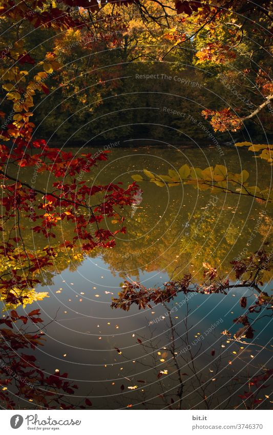 Golden Autumn Autumnal Autumn leaves Autumnal colours Automn wood reflection Mirror image Water Surface of water Water reflection Lake Body of water Reflection