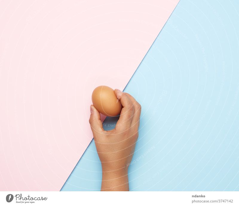 female hand holding a whole brown chicken egg food organic groceries blue pink protein fresh healthy meal nature ingredient raw eggshell background easter