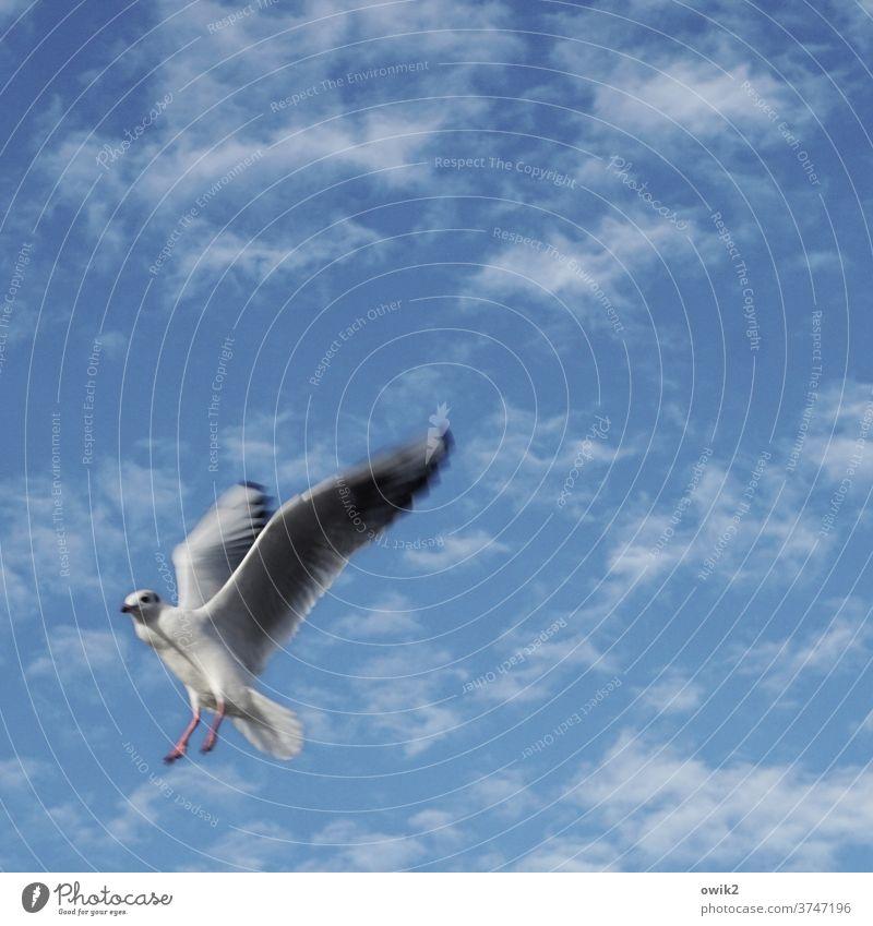 emergency braking Seagull Animal 1 Movement Looking Sky Sunlight Animal portrait Copy Space top Copy Space right Long shot Colour photo Joie de vivre (Vitality)