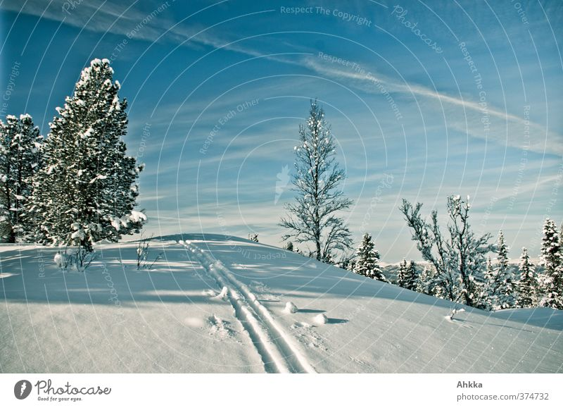 Nature Vacation & Travel Blue Loneliness Far-off places Winter Mountain Snow Lanes & trails Freedom Horizon Ice Perspective Beautiful weather Future Adventure