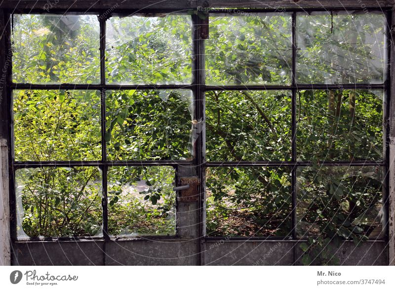 View into the garden through destroyed window panes Window Window pane Glass Window frame door door handle Broken Decline Destruction Ruin Transience Old Dirty