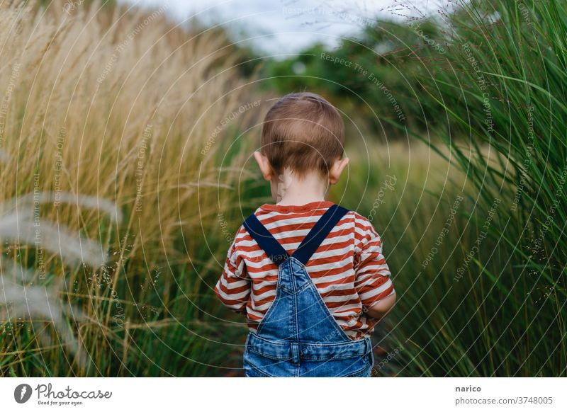 Toddler runs through grass grasses Overalls Colour photo 1 - 3 years Infancy Exterior shot explorers Playing Human being Child Boy (child) Life portrait Nature
