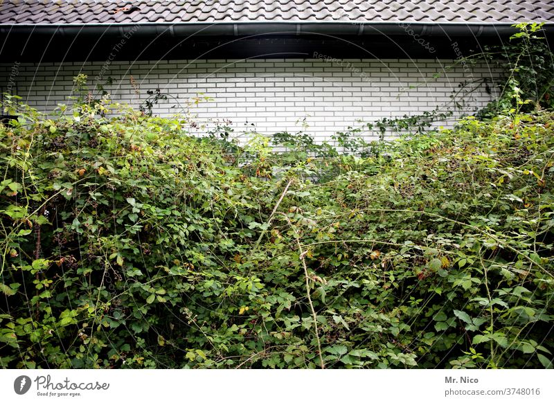 Architecture and Nature I Nature Wins House (Residential Structure) built Facade Roof Eaves roof tiles green Ivy shrub Berry bushes flaked Plant overgrown