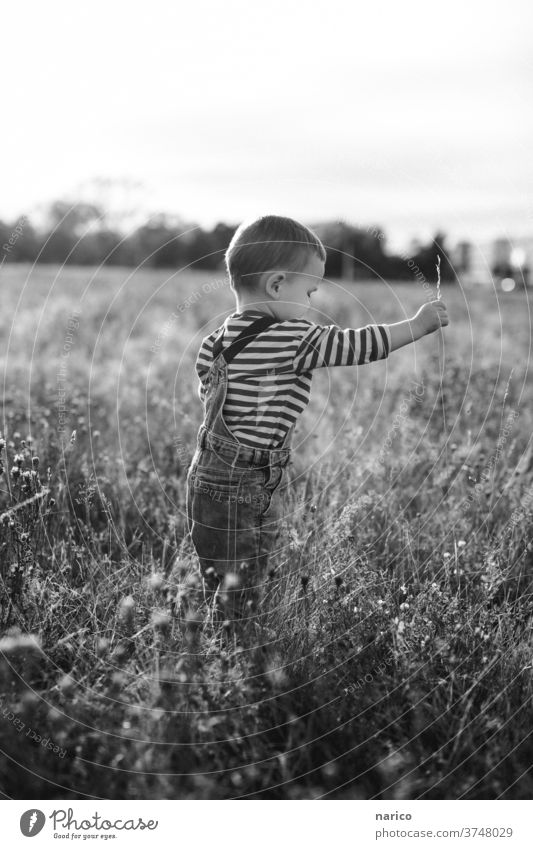 Boy stands in a meadow and pulls a blade of grass Child Infancy Boy (child) Exterior shot Playing Toddler Nature Shallow depth of field Human being Life