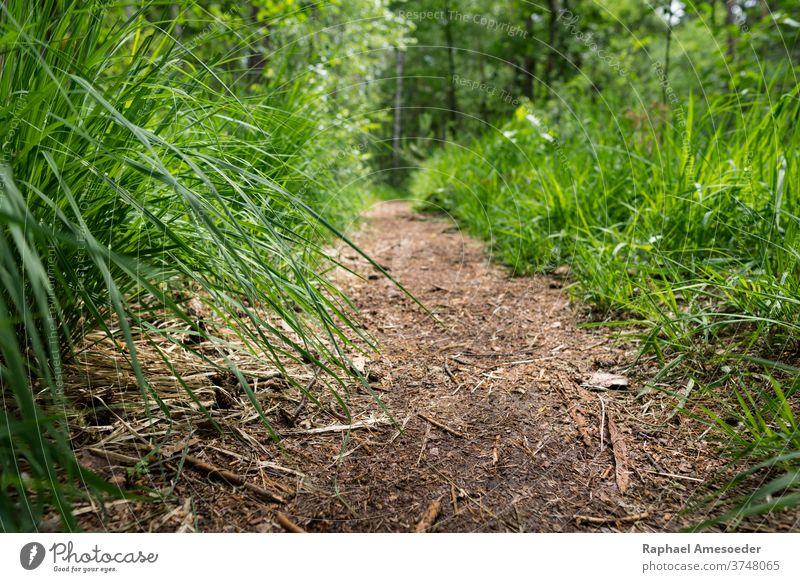 Path through forest with green grass alongside culm ground footpath trail floor woodland foliage rural beautiful beauty bush day landscape leaf meadow natural