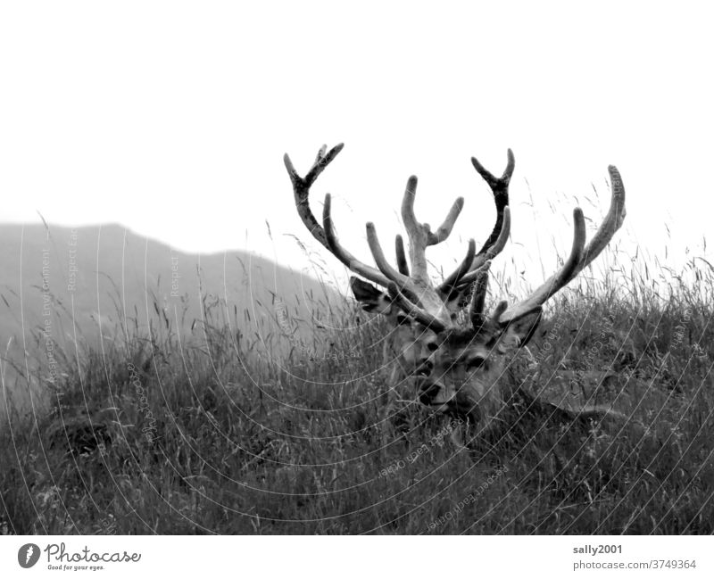 Two proud stags resting in the grass... Wild Animal Wild animal antlers Pride Meadow Strong Impressive strength Nature Lonely Grass king of the forest Force 2