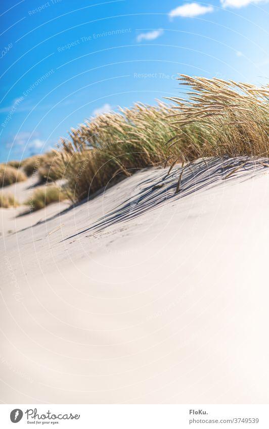 White sand beach near Skagen in Denmark Beach North Sea Coast Nature Landscape North Sea coast dunes Marram grass Summer vacation Relaxation voyage Europe Ocean