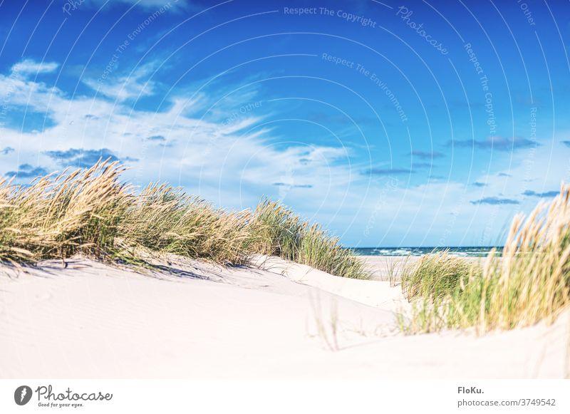 North Sea beach near Skagen in Denmark Beach Coast Nature Landscape North Sea coast dunes Marram grass Summer vacation Relaxation voyage Europe Ocean Sand White
