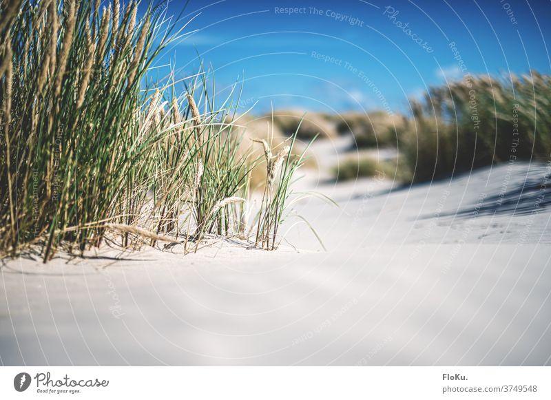 Danish North Sea beach in sunshine Beach coast Nature Landscape North Sea coast dunes Marram grass Summer vacation Relaxation voyage Denmark Europe Ocean Sand