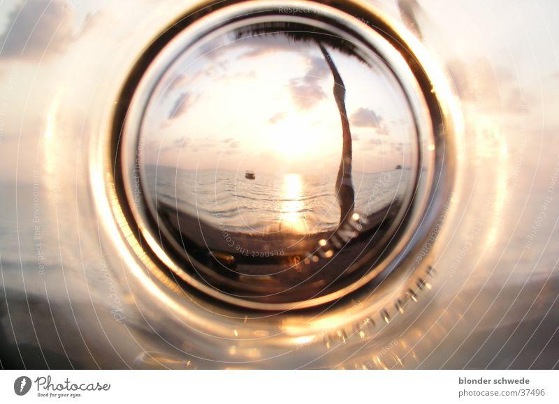 Sun Ocean Glass Empty Palm tree Intoxicant Los Angeles