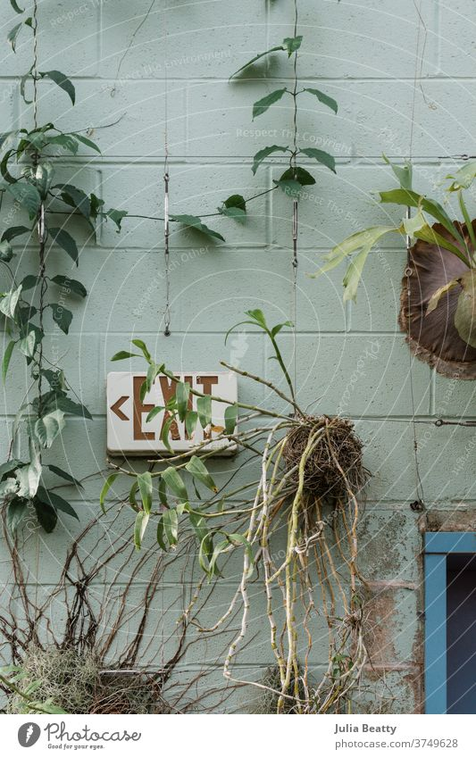 Plants mounted to a green cinder block wall alongside an EXIT sign plants nursery conservatory staghorn fern pothos vining vine roots rootball leaves branches