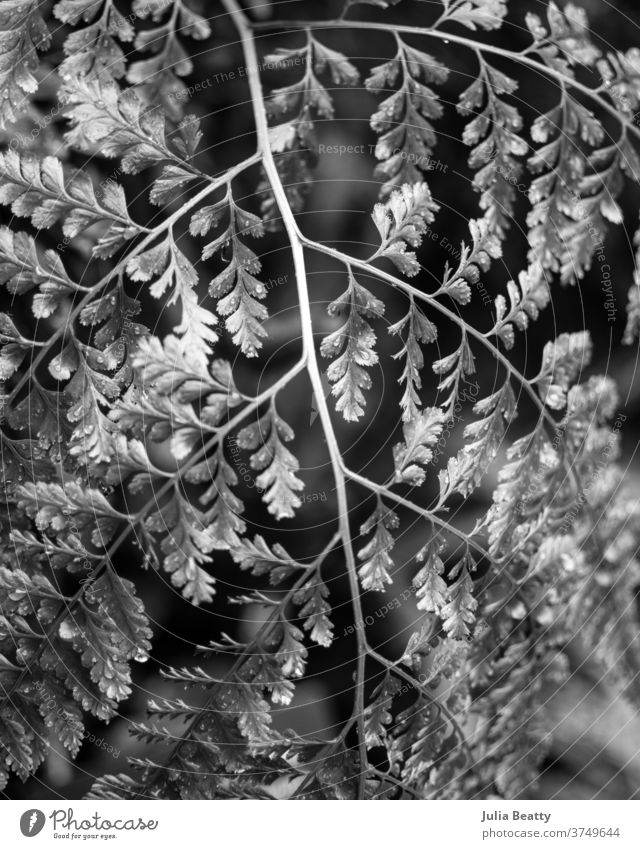 fern frond against blurred background black and white Fern Fern leaf ferns bokeh bokeh lights Nature Plant Foliage plant Shallow depth of field Environment Leaf