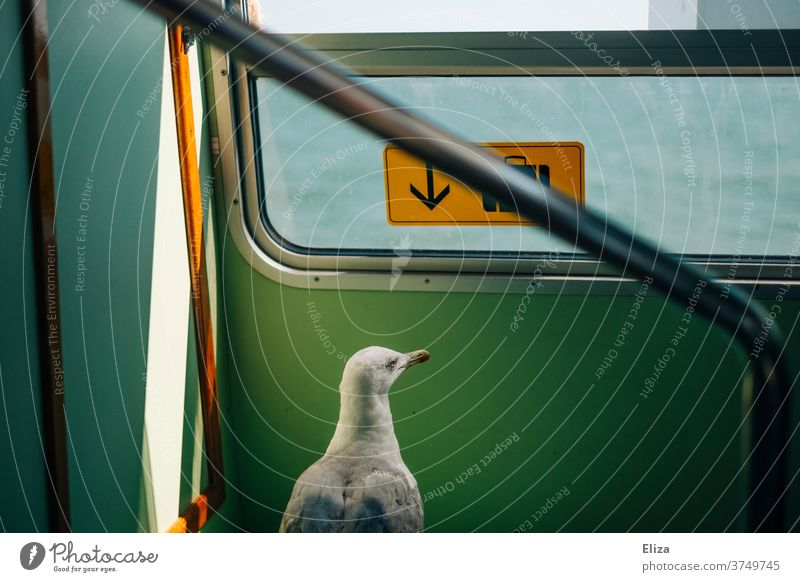A seagull on a journey Seagull travel Train Ferry Animal Bird Freedom inquisitorial on travel surreal Whimsical Vacation & Travel vaporetto Venice Water