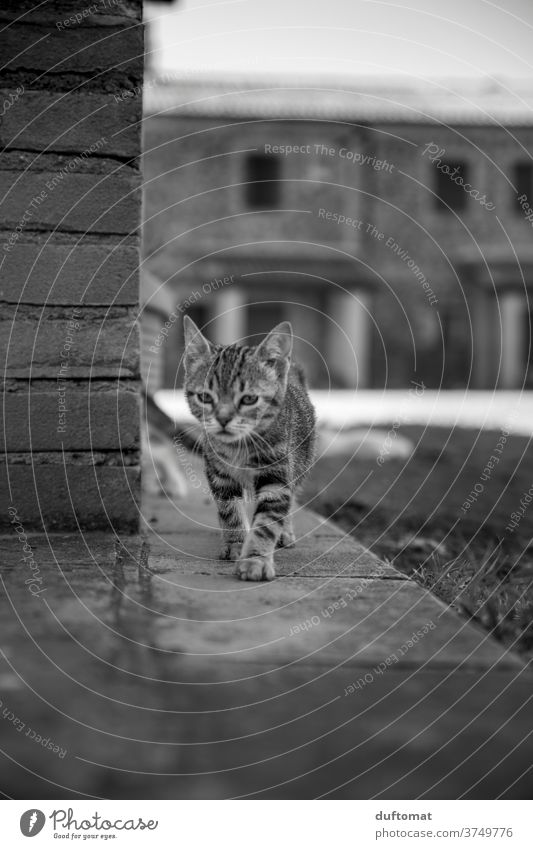 Curious cat child Cat Kitten Cat eyes feline cats Cat's head inquisitorial curious parlourieger Striped Small youthful Child Animal Animal child animal baby Pet