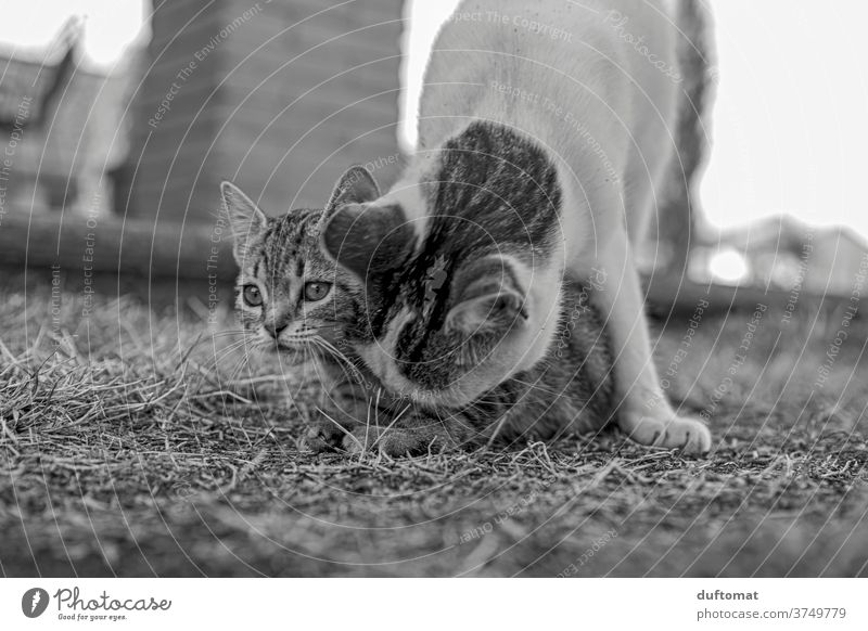 Curious cat child Cat Kitten educate Cat eyes feline cats Cat's head inquisitorial curious Family Motherly love parlourieger Striped Small youthful Child Animal