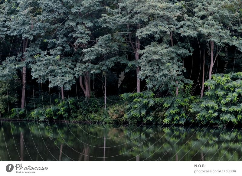 Mysterious forest with reflection in water tree Forest green conceit Deserted Day Exterior shot Shadow Contrast Black Environment Colour photo Nature Plant