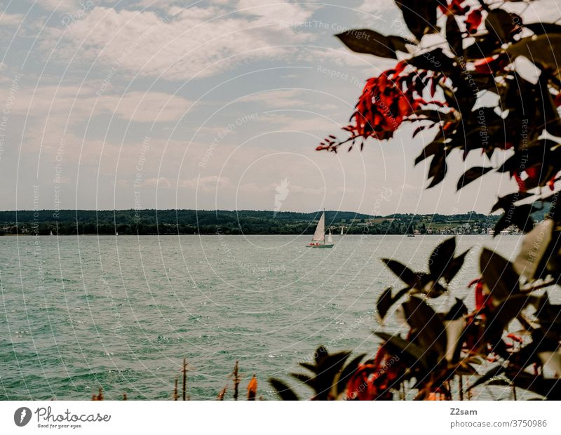 Sailing ship on the Bodensee shipping Lake Constance Body of water Nature Landscape bushes flowers plants Summer Moody Warmth vacation Sports travel Sky Water