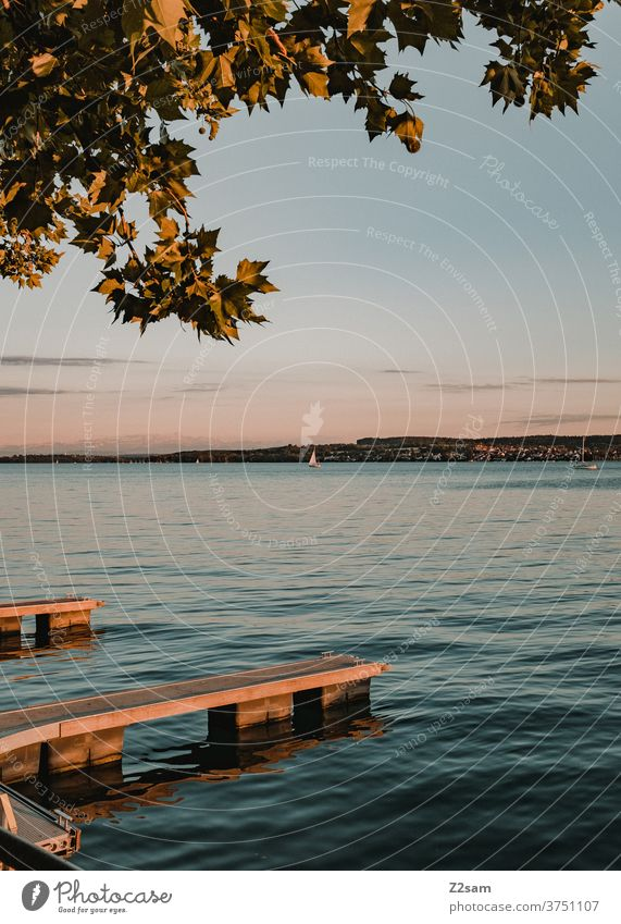 Sunset at Lake Constance sunset Water Summer Nature tree Landscape tranquillity Romance Colour warm vacation holidays travel Baden-Wuerttemberg