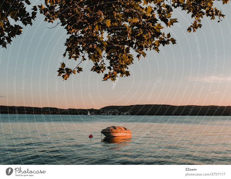 Boat at sunset on Lake Constance boat Sunset Water Summer Nature tree Landscape tranquillity Romance Colour warm vacation holidays travel Baden-Wuerttemberg
