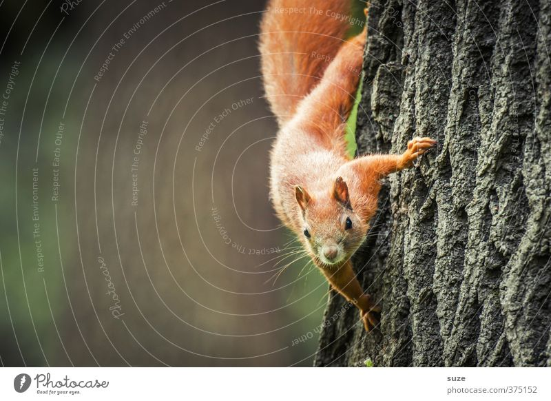 Nature Plant Tree Red Animal Environment Small Brown Wild animal Cute Curiosity Pelt Animal face Tree trunk Hang Animalistic