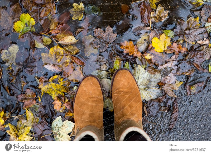 Brown boots stand in puddle with colourful autumn leaves Autumn foliage Puddle Boots Footwear Nature Water Rain variegated Autumn leaves autumn mood Autumnal