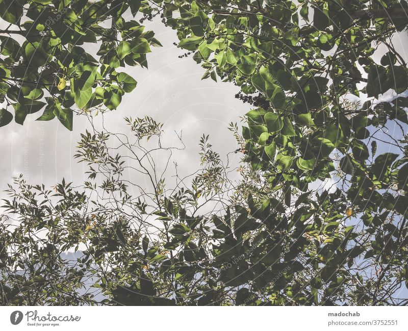 nature Nature leaves twigs branches green Plant tree bush Twigs and branches flaked Deserted Environment natural Exterior shot Growth
