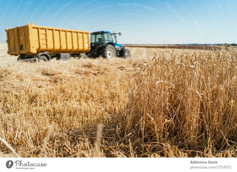 Agricultural machine in wheat field tractor agriculture harvest collect season grain dry transport farmland countryside rural nature golden trailer parked