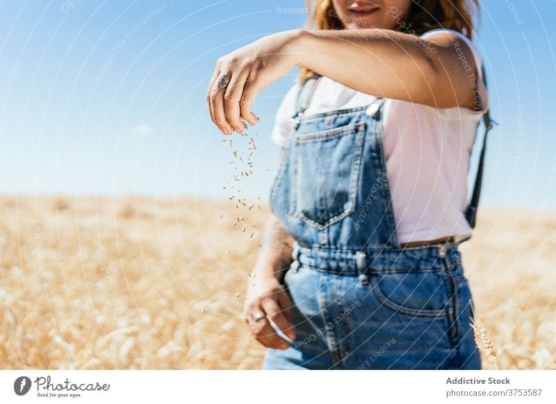 Crop woman with wheat grain in countryside pour field farmer golden cereal seed rural female agriculture harvest cultivate fresh organic natural plant stand