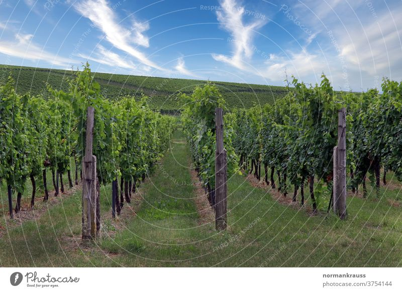 Vineyards in the Southern Palatinate vines wine-growing area Wine growing Autumn wine landscape southern Palatinate palatinate Landscape green Agriculture