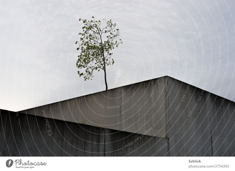 Young tree in front of the sky and in the foreground desolate concrete blocks youthful Concrete wall Concrete cuboid Sky cloudy expansion joint halved divided