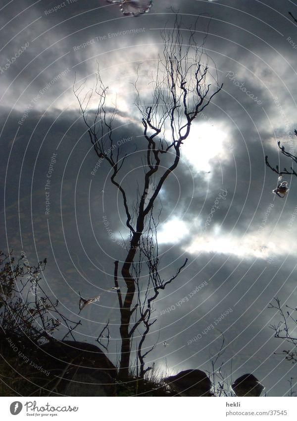Tree Sun Clouds Mirror Mirror image