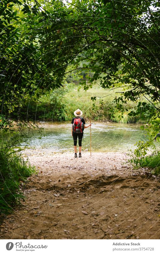 Unrecognizable traveler near lake in woods tourist forest natural admire pond backpack trekking wooden stick clear water aqua trip hike nature scenic explore