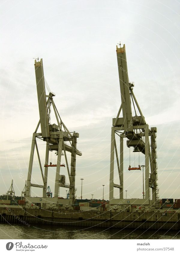 elephants Crane Elephant Twin Logistics Industry Harbour Container Hamburg