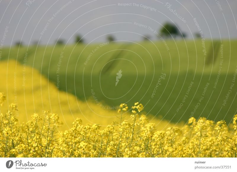 Green Yellow Landscape Field Hill Agriculture Canola