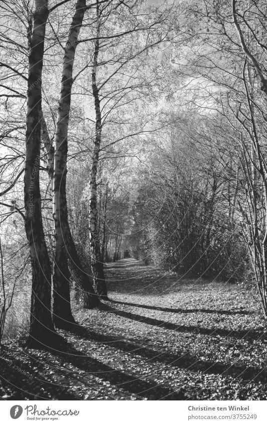 A forest path with long shadows and almost bare trees and bushes off Loneliness paths and paths Autumn Winter November melancholy Sadness weaker mourning card