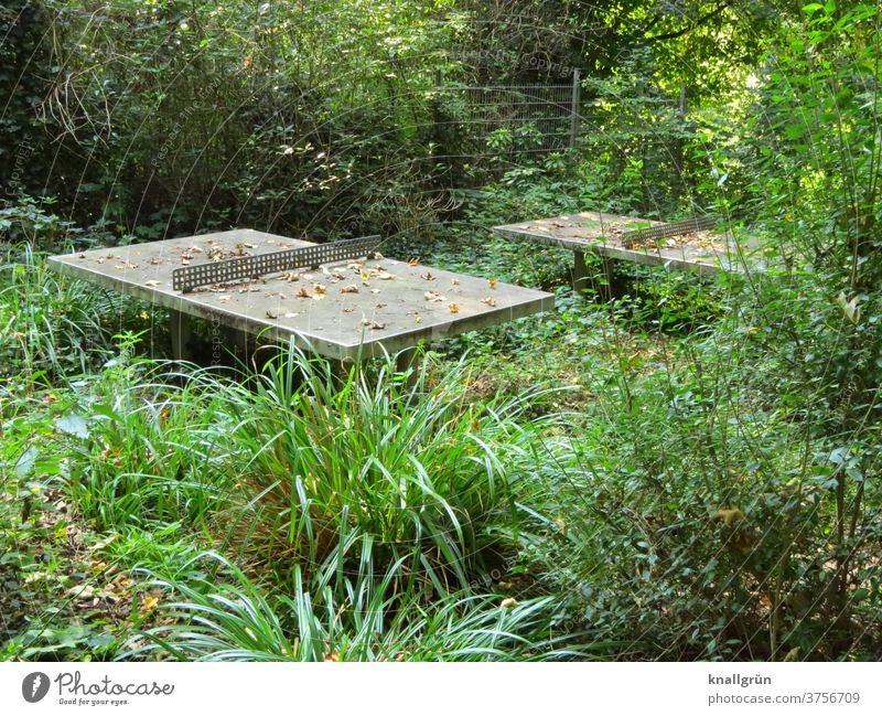 Two outdoor concrete table tennis tables on a completely overgrown sports field Sports Wilderness Nature Table tennis table Playing Unkempt Weed proliferate