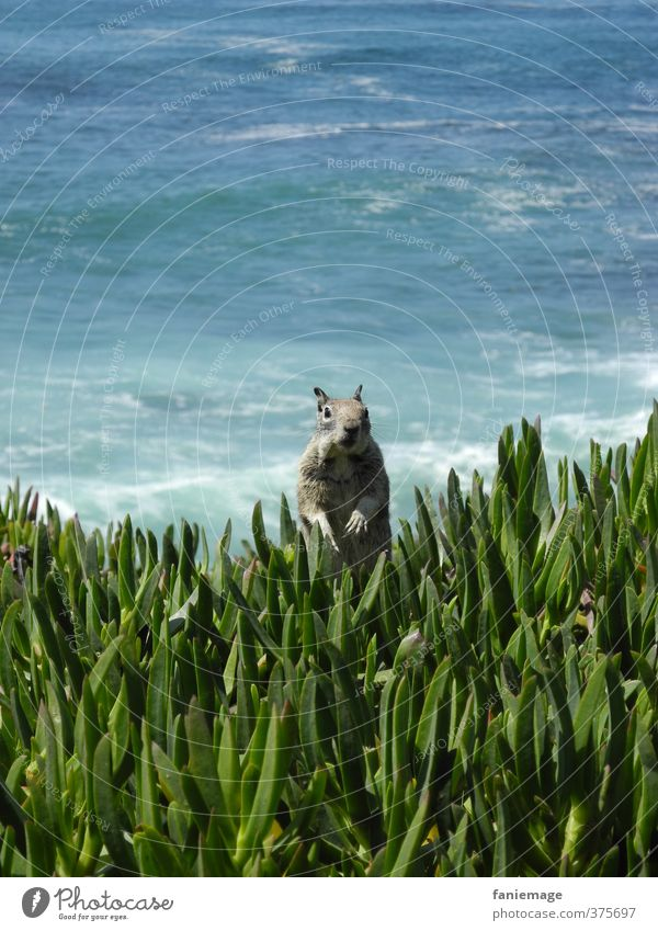 Nature Blue Green Water Ocean Animal Environment Coast Funny Gray Brown Wild animal Waves Free Stand Observe