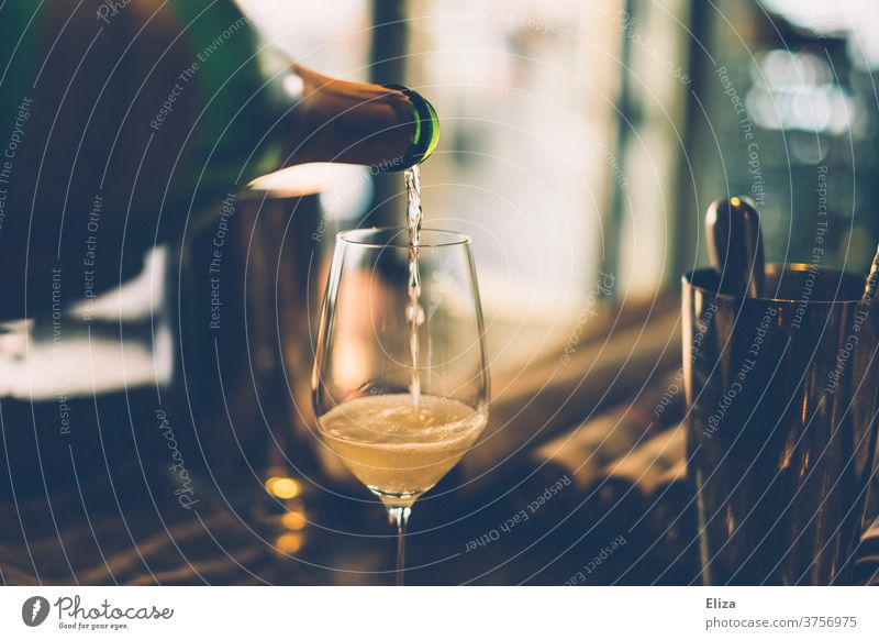 Champagne is poured from a bottle into a glass Glass Cast Sparkling wine Prosecco Feasts & Celebrations Alcoholic drinks Elegant Bear Lifestyle Interior shot