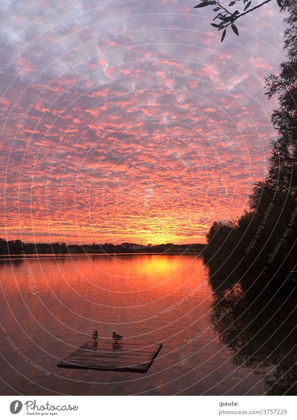 Sunset at the bathing lake with ducks Lake Mallards Water Nature Sky Romance Dusk Evening Vacation & Travel Twilight Clouds Reflection Landscape Dramatic