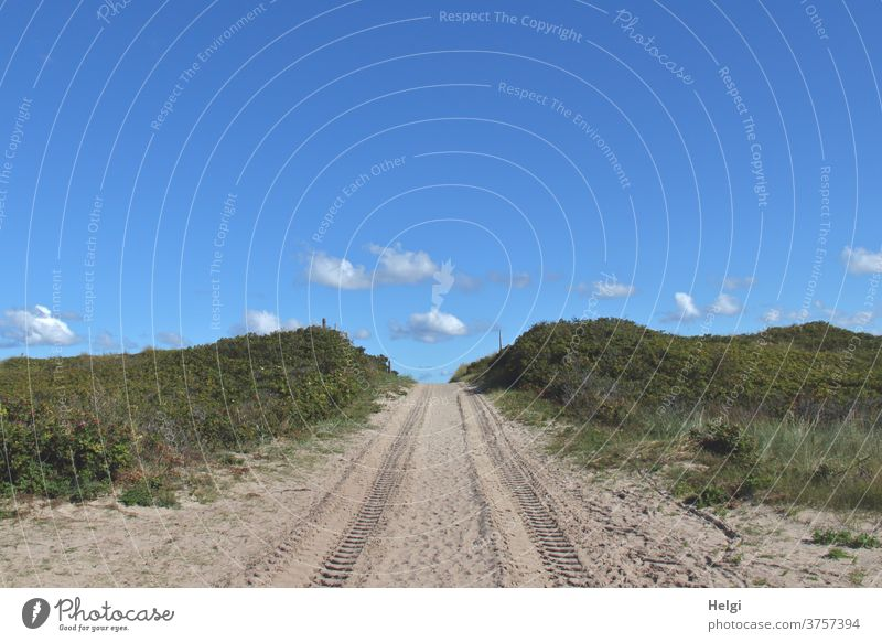 Sand path through the dunes with tractor tracks in front of a blue sky with small clouds off dune path Tracks Plant Grass Wild rose Sky Clouds Landscape Nature